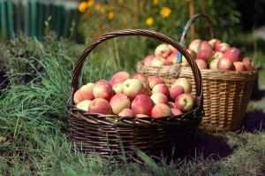 gambar-dua-keranjang-buah-apel=httpgambargambargratis.com