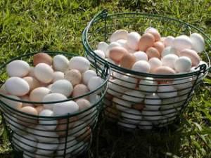 telur-dalam-keranjang=httpahyanarif.com