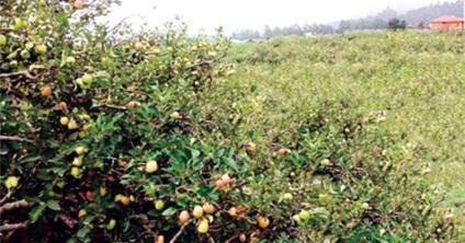 Kebun Jeruk Pak Tohir